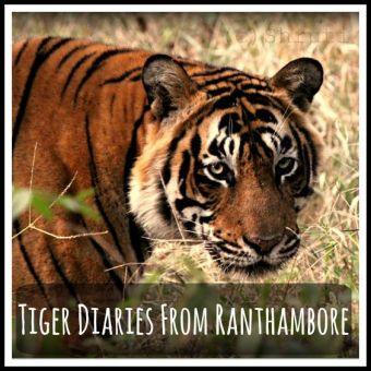 Ranthambore National Park, Sawai Madhopur,  Rajasthan,  India