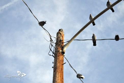 Pigeons everywhere!