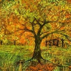 Trees in fall folliage dance
