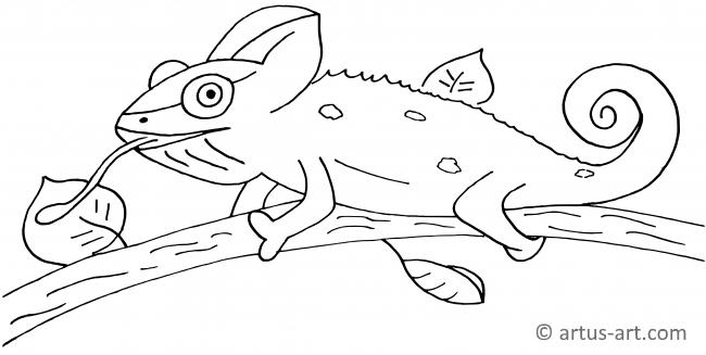 Chameleon Coloring Page Printable Coloring Page Artus Art