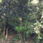 Terreno em Itacoatiara