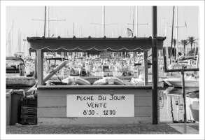 Etales poisson - Saint Cyprien Plage (13 sur 16)