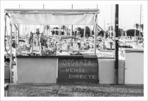 Etales poisson - Saint Cyprien Plage (14 sur 16)