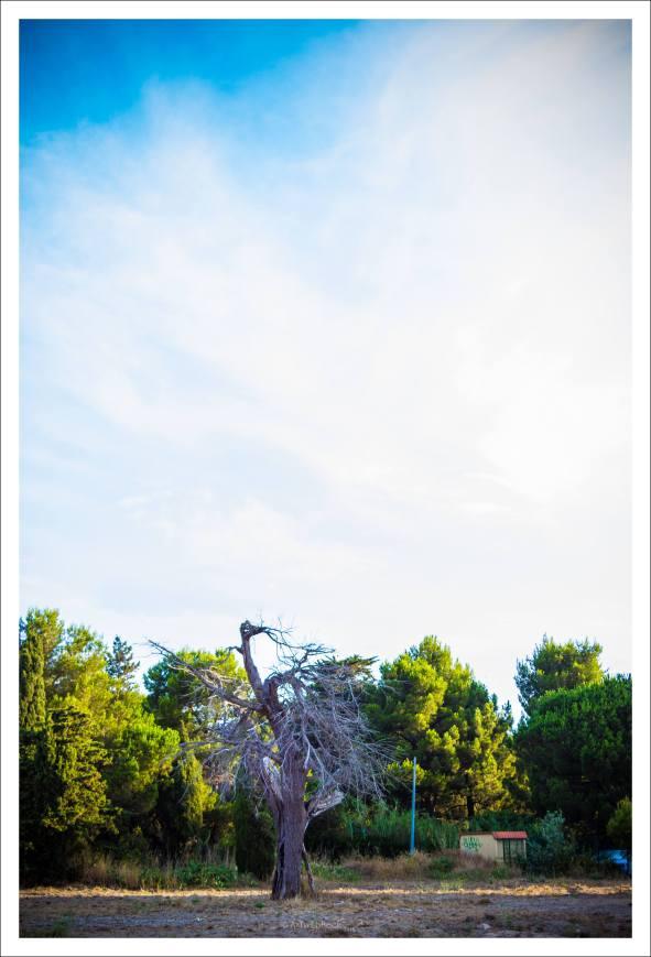 Paysages de bon matin - Saint Cyprien Plage (22 sur 22)
