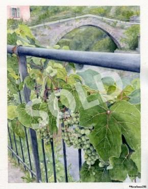 Grapes of Rocchetta Nervina (sold)