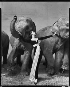 Dovima with elephants, evening dress by Dior, Cirque d'Hiver, Paris, August 1955. Photograph by Richard Avedon © The Richard Avedon Foundation.