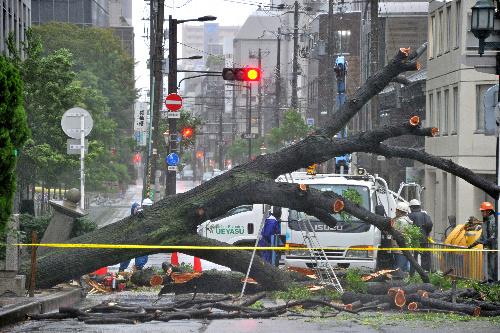 台風17号の風雨で倒れ、道路をふさいだ街路樹