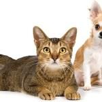 猫と犬は平等か