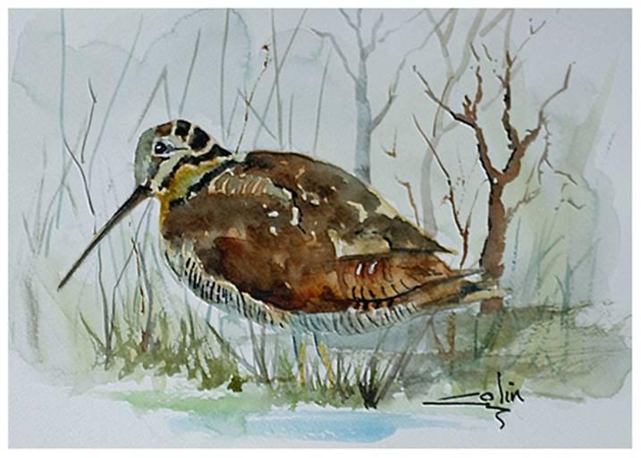 Woodcock 290 x 200 £25