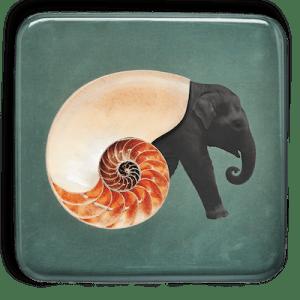 gangzai-vide-poche-shellephant