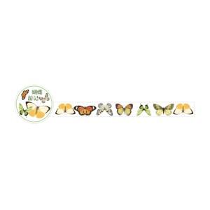 Nature Butterflies
