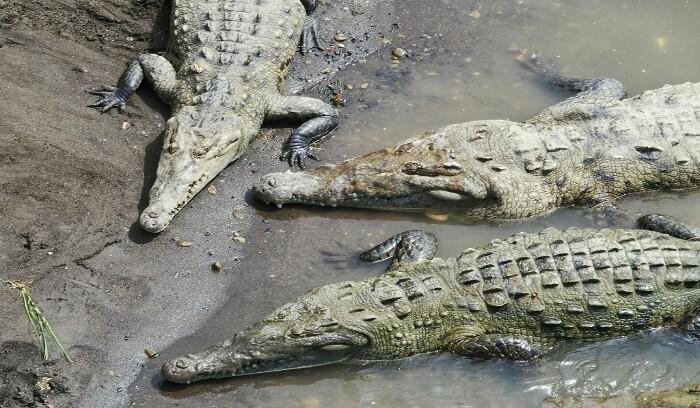 Tárcoles ibaia. Costa Rica.