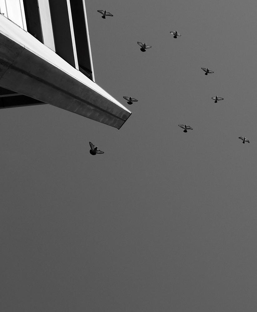 Black and White Minimalist