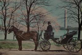 Woman tours D.C.'s cherry blossoms in the 1920s