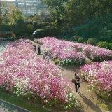 広島市植物公園 写生大会