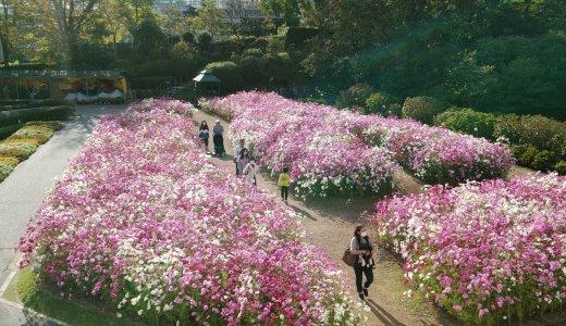 【広島の写生大会のすすめ】植物公園では色々もらえてお得でしたよ!小学生から大人まで参加できました