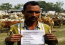 BSF apprehended Cattle Smugglers with 425 Cattles