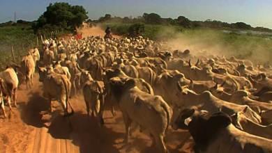 Photo of Cattle Smugglers Adopting New Modus Operandi