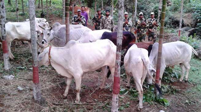 BSF Confiscates Neogel Explosive & Cattles