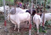 Photo of BSF Confiscates Neogel Explosive & Cattles