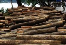 Photo of BSF Seized Huge Quantity Of Wooden Logs