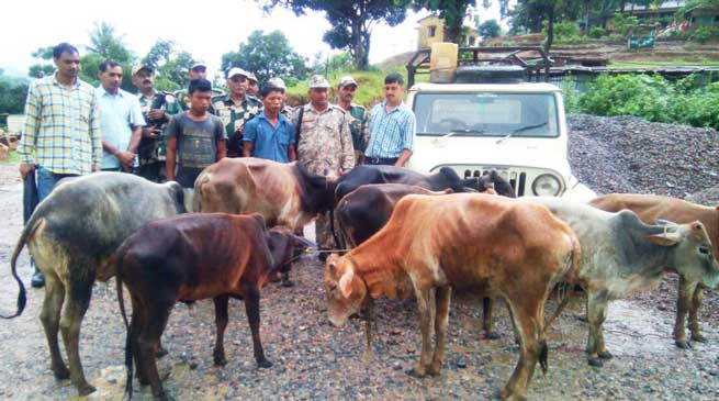Shillong- BSF Nabs Two Cattle Smugglers