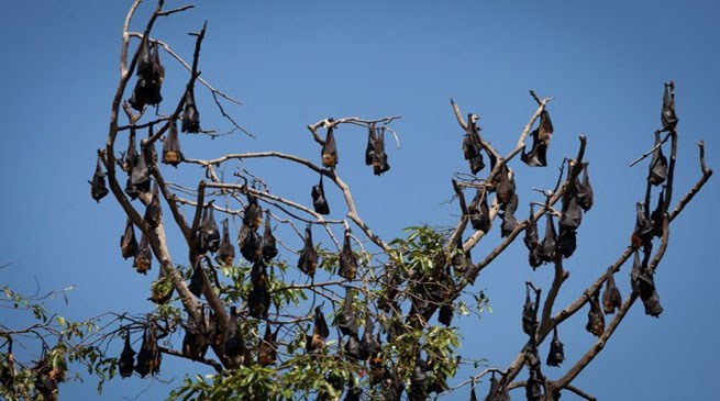 A bizarre village in India where bats are worshipped