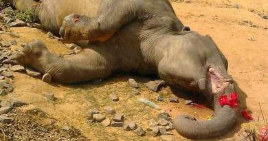 Elephants killed in train Accident, NF Railway Institute Enquiry