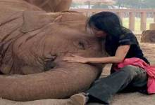 Photo of Must watch- Elephant falls asleep after woman sings lullaby
