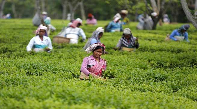 Serishpore Tea Estate on way to becoming illicit liquor free Estate