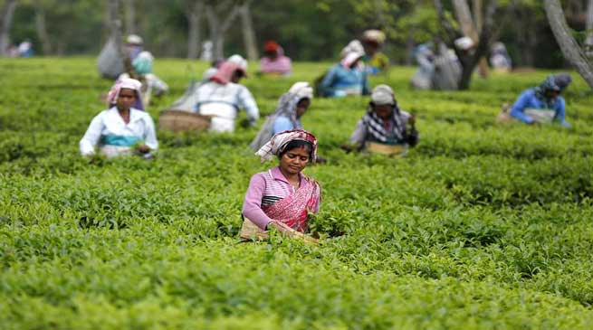 Serishpore Tea Estate on way to becoming illicit liquor free Estate