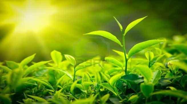 Awareness Programme for Tea Plantation