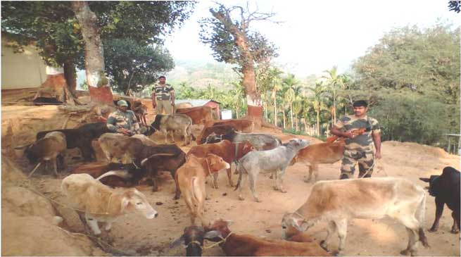 Shillong- BSF Nabs Six Indian Cattle Smuggler