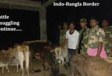 Photo of BSF Nabbed Cattle Smuggler with Cattle and Seizes Wooden Logs