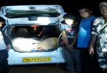 BSF nabbed two Cattle Smuggler, seized one Alto Car