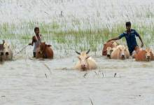 Assam floods- Death toll 40,  15 lakh people across 23 districts affected