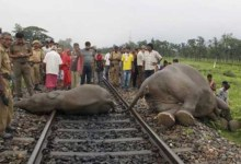 Assam: 5 Elephant killed by speeding train