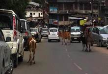 Photo of Arunachal : Stray Animals rules the Road of Itanagar and Naharlagun