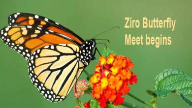 Photo of Arunachal: Fifth edition of the Ziro Butterfly Meet begins