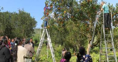 Arunachal:  NERIST developed fruit harvesting ladder