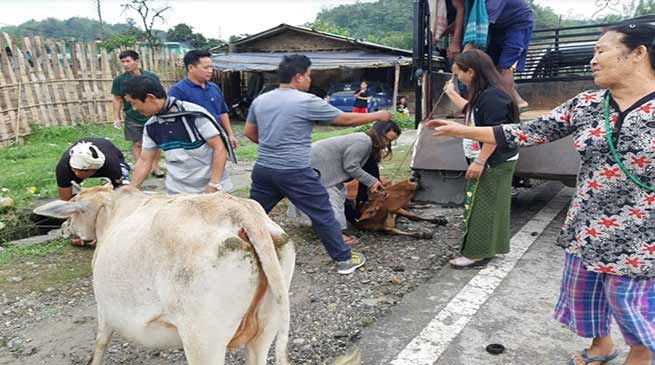 Itanagar: 40 stray animals evicted