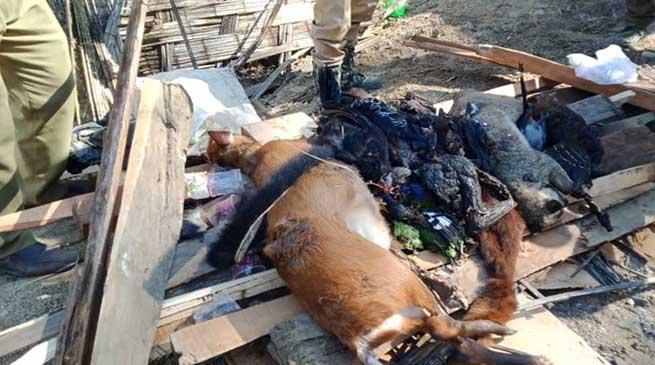 Arunachal: Forest officials seized 30 nos of carcass wild animals