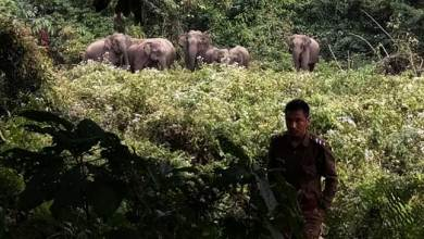 Arunachal: Be alert......elephant herd on the move- forest department
