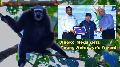 Photo of Arunachal: Anoko Mega of Roing gets Young Achiever's Award for conservation Mishmi Hills Hoolock gibbon