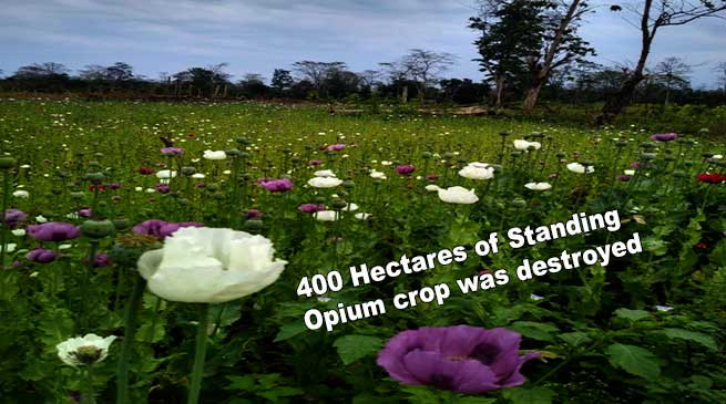 Arunachal: 400 Hectares of Standing Opium crop was destroyed in Lohit Reserve Forest
