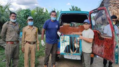 Photo of Arunachal:  Rescued Asiatic Himalayan Bear Cub handed over to CBRU PTR Seijosa