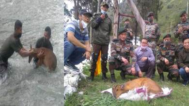 Photo of Arunachal: Indian army rescues wildlife in west kameng