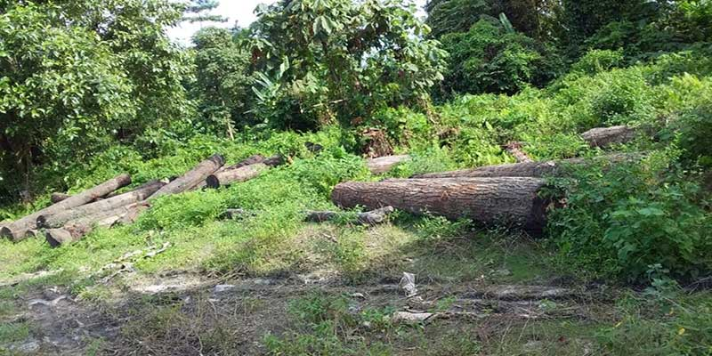 Arunachal: AdiSU East Siang and ATASU to fight against illegal timber logging with Seram village