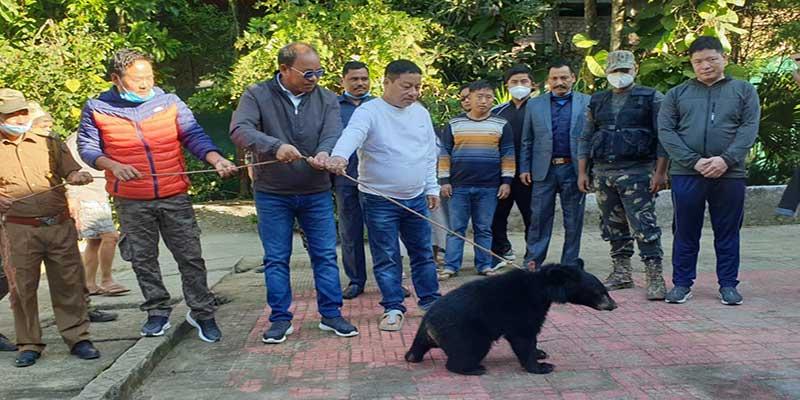 Arunachal: Rescued Himalayan Black Bear gets place in Itanagar Zoo