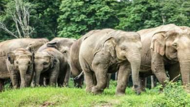 Arunachal: Be alert.... Elephant Herd seen alongBhalukpong-Tippi-Jamiri road